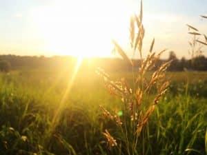 Wiese im Sonnenschein - Pollenflug